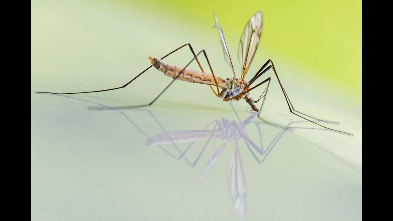 https://cdn.cnngreece.gr/media/news/2018/11/08/153945/photos/snapshot/mosquito-1754359_1920.jpg