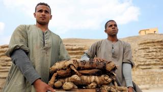 Σημαντικά ευρήματα στην Αίγυπτο: Δεκάδες γάτες - μούμιες βρέθηκαν σε αρχαίους τάφους