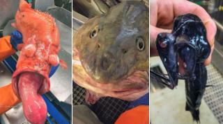 Ρώσος ενθουσιάζει τα social media με τα... απόκοσμα πλάσματα που ψαρεύει