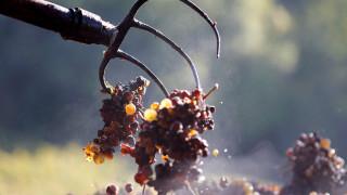 Μέθη & μόχθος: φωτογραφική ωδή στα μεγάλα κόκκινα κρασιά της ευζωίας
