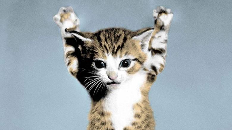 Νιάου για ρεκόρ: 235 γάτες στη μεγάλη γιορτή των τετράποδων στην Κροατία