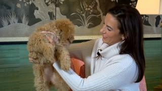 «Όλα είναι ίδια»: Αμερικανίδα εξηγεί γιατί αποφάσισε να κλωνοποιήσει τον σκύλο της