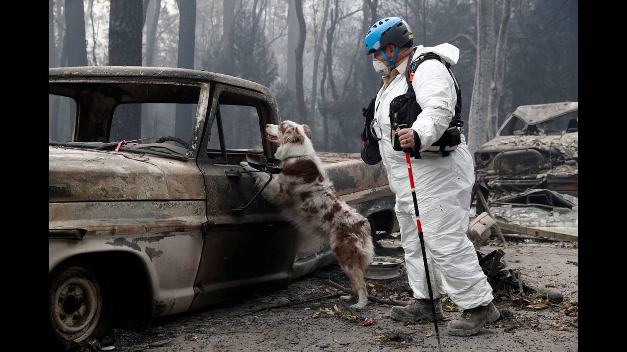 https://cdn.cnngreece.gr/media/news/2018/11/19/155249/photos/snapshot/2018-11-14T233559Z_1440644612_RC153FE49650_RTRMADP_3_CALIFORNIA-WILDFIRES-DOGS.JPG
