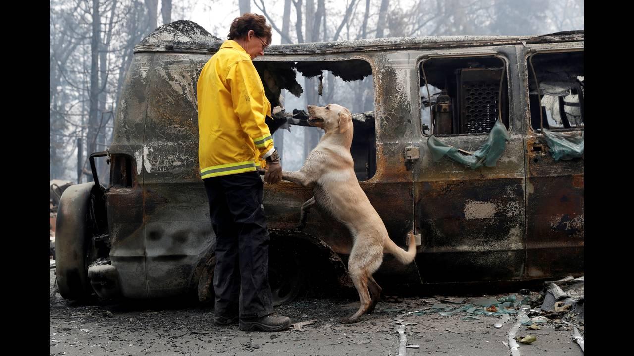 https://cdn.cnngreece.gr/media/news/2018/11/19/155249/photos/snapshot/2018-11-15T050442Z_1617719959_RC14F8643DC0_RTRMADP_3_CALIFORNIA-WILDFIRES-DOGS.JPG