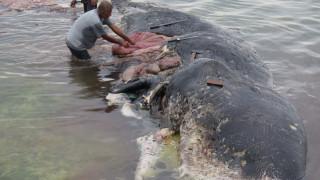 Ινδονησία: Νεκρή φάλαινα είχε στο στομάχι της 6 κιλά πλαστικών αποβλήτων
