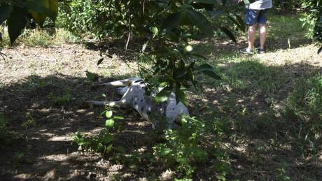 Κτηνωδία στην Κρήτη: Κρέμασαν σκύλο σε γέφυρα