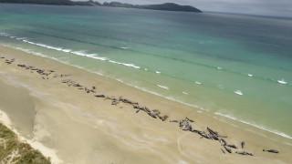 Δεκάδες φάλαινες ξεβράστηκαν νεκρές σε ακτή της Νέας Ζηλανδίας