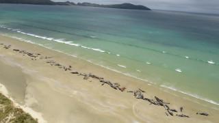 Νεκρές 145 φάλαινες σε ακτή της Νέας Ζηλανδίας