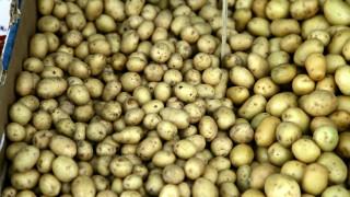 Οι Τουρκοκύπριοι κάνουν ουρές στα Κατεχόμενα για ένα σακί πατάτες!