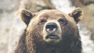 Καναδάς: Νεκρή μητέρα και το 10 μηνών μωρό της από επίθεση αρκούδας