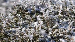 Καιρός: Χιονίζει στην Πάρνηθα - Βίντεο από το καταφύγιο Μπάφι