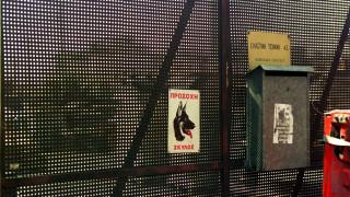 Κυπαρισσία: Με σοβαρές κακώσεις νοσηλεύεται 2χρονος μετά από δάγκωμα σκύλου
