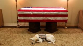Η συγκινητική φωτογραφία του σκύλου του Τζορτζ Μπους: Πιστός μέχρι το τέλος