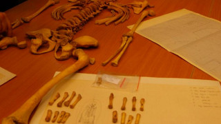 Μυστήριο στην Κρακοβία: Παιδικός σκελετός με κρανίο πτηνού στο στόμα προβληματίζει τους ειδικούς