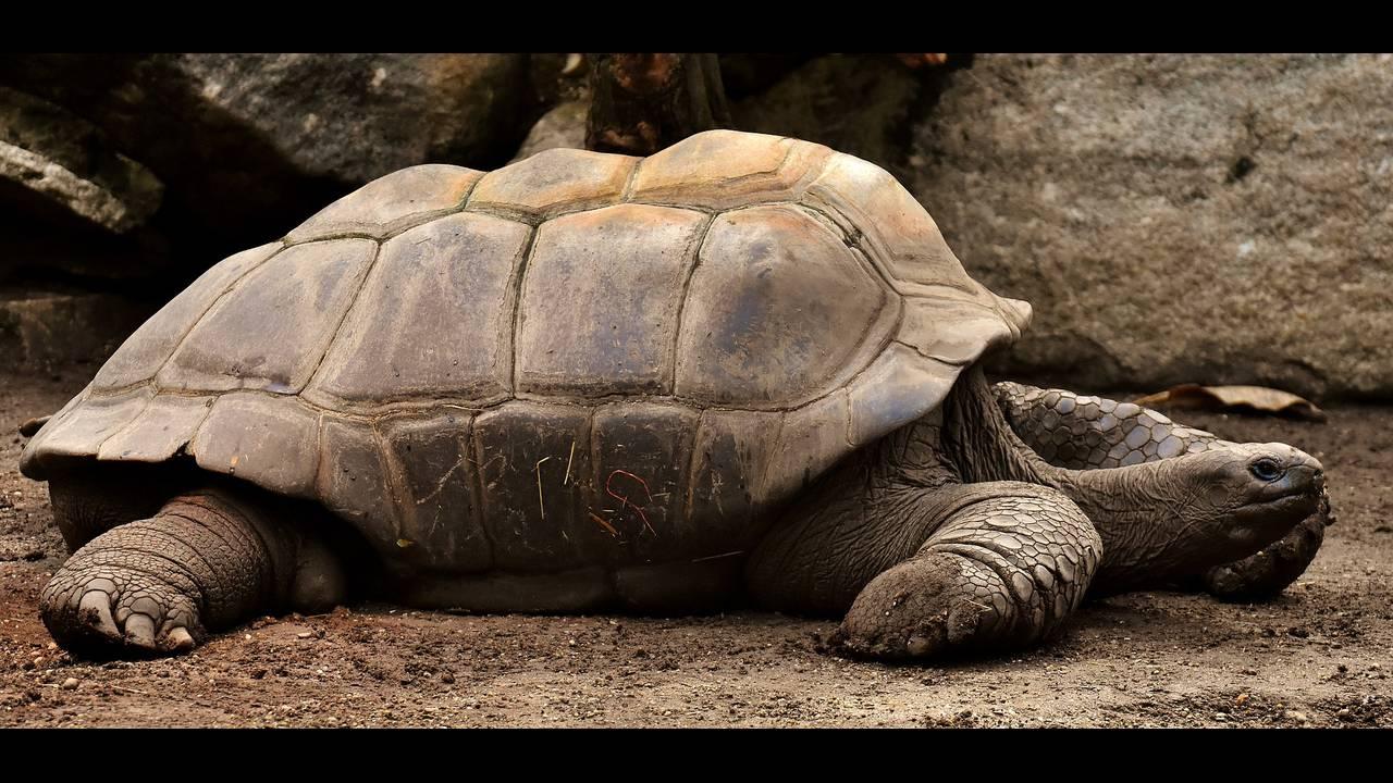 https://cdn.cnngreece.gr/media/news/2018/12/04/156979/photos/snapshot/giant-tortoises-3315158_1920.jpg