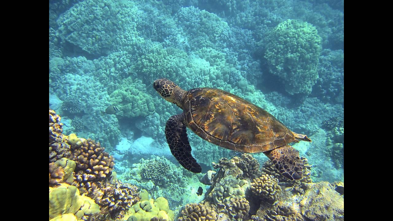 https://cdn.cnngreece.gr/media/news/2018/12/04/156979/photos/snapshot/sea-turtle-547162_1920.jpg
