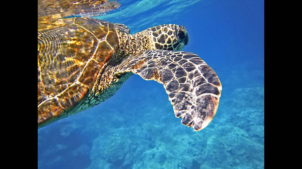 https://cdn.cnngreece.gr/media/news/2018/12/04/156979/photos/snapshot/sea-turtle-547163_1920.jpg