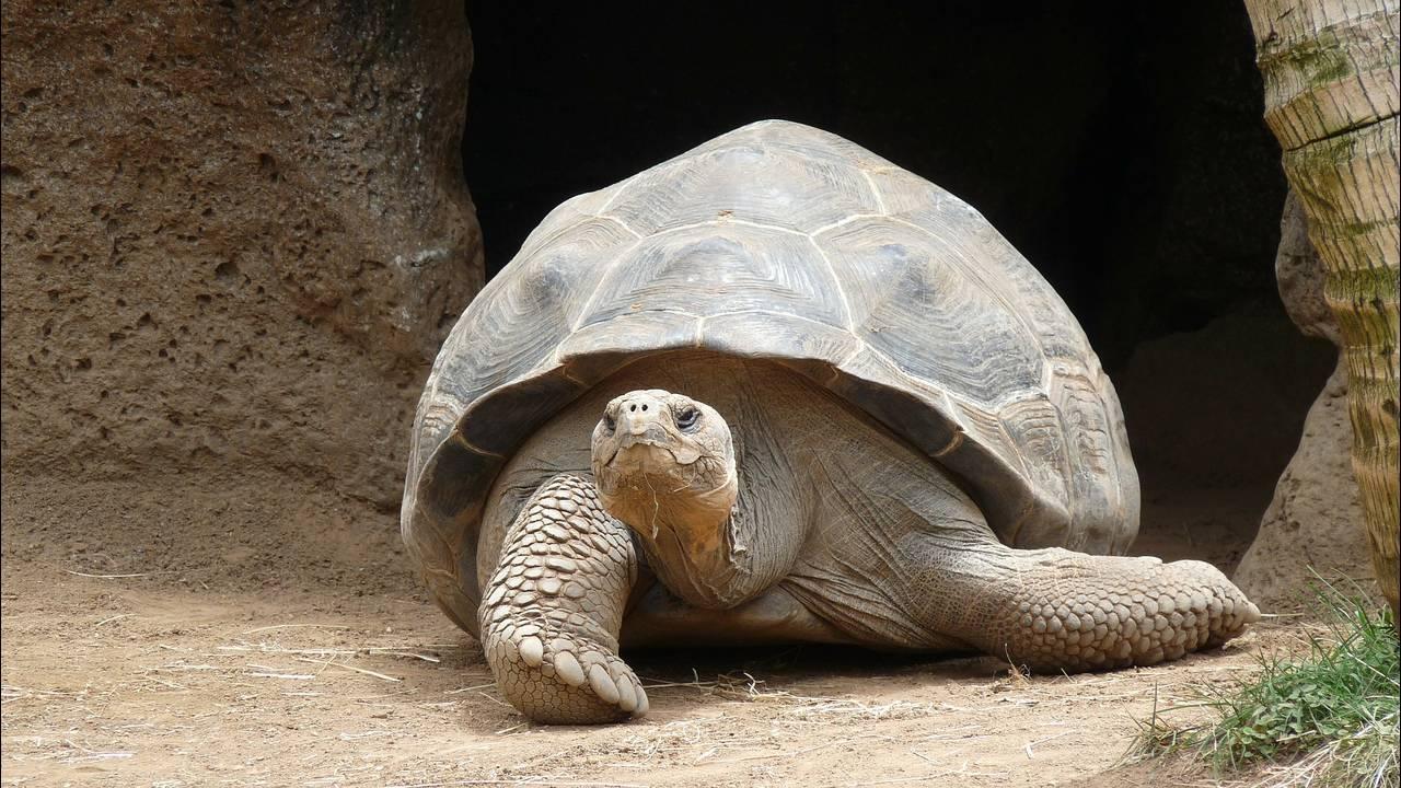 https://cdn.cnngreece.gr/media/news/2018/12/04/156979/photos/snapshot/turtle-177661_1920.jpg