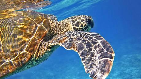 Μοναχικός Τζόρτζ: Παρότι μακαρίτης, η αρσενική θαλάσσια χελώνα αποκαλύπτει τα μυστικά της μακροζωίας