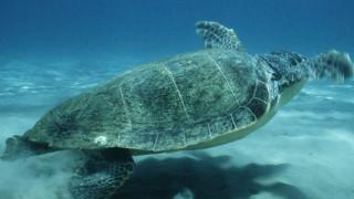 Έκθεση WWF Ελλάς: Πληγή για το περιβάλλον η αδιαφάνεια προς τις εξορύξεις υδρογονανθράκων