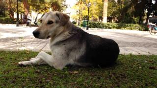 Μαζική δηλητηρίαση αδέσποτων ζώων στον Αλμυρό Βόλου