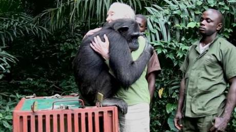 Μία αγκαλιά ευγνωμοσύνης: Η Τζέιν Γκούντολ μιλά για το χιμπατζή που τη σημάδεψε