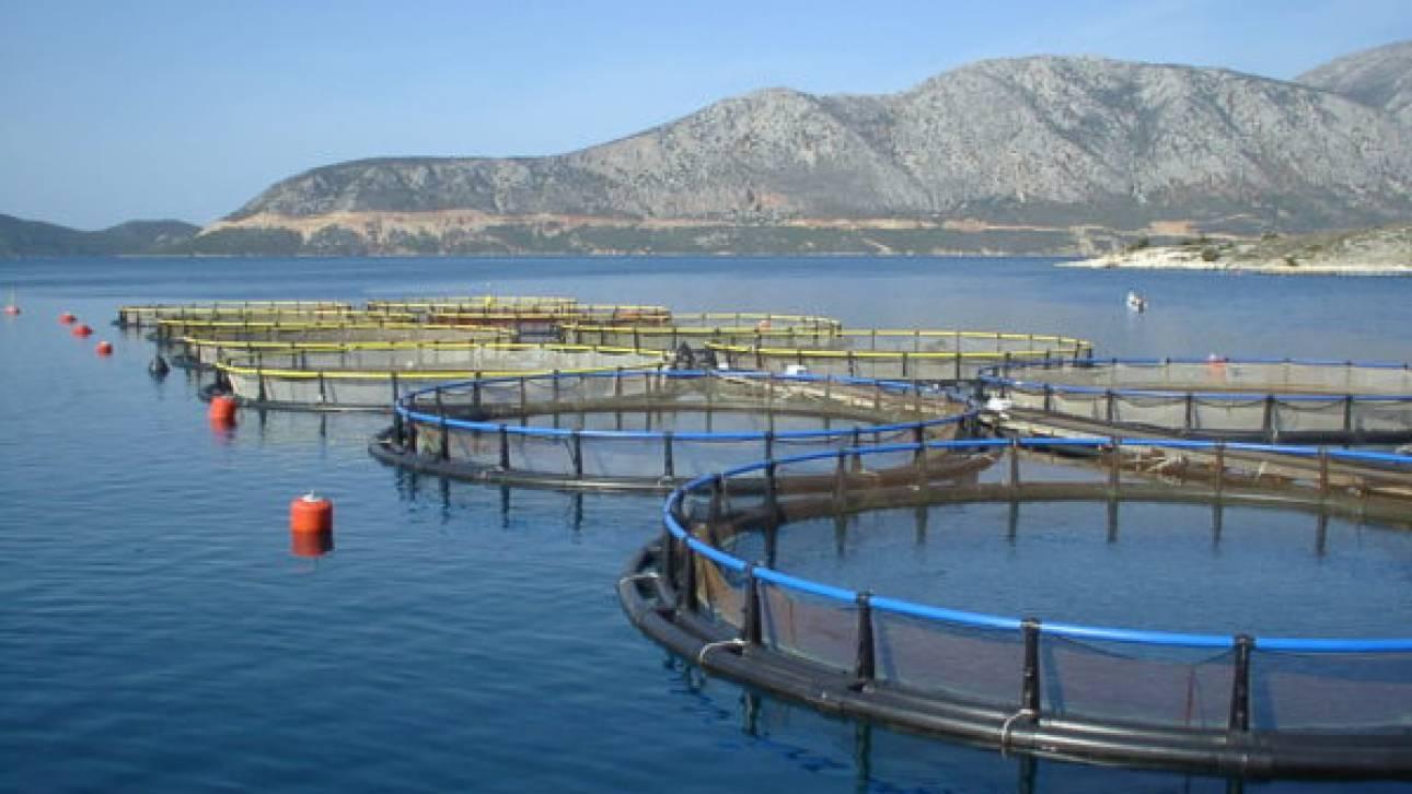 Γλυτώνουν τη κατεδάφιση και τα πρόστιμα μονάδες υδατοκαλλιέργειας που λειτουργούν χωρίς άδεια