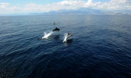 Νίκος Βογιατζάκης: Από τον πολιτισμό των ανθρώπων, στον πολιτισμό των δελφινιών