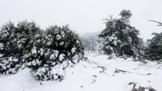 Καιρός: Συνεχίζεται η επέλαση του χιονιά – Σε ποιες περιοχές θα χιονίσει την Παρασκευή