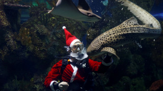 Ο Άγιος Βασίλης ταϊζει καρχαρίες στη Μάλτα