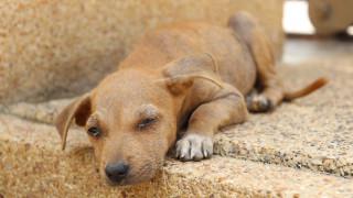 Φιλόζωη κινδυνεύει με φυλάκιση επειδή τάιζε αδέσποτα σκυλιά!