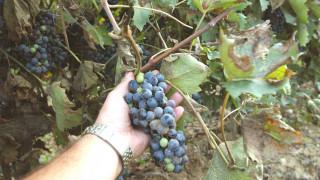 Πώς η κατάργηση του ΕΦΚ στο κρασί ωφελεί την οινοποιία: Τέσσερις οινοποιοί αναλύουν