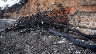 Τραγωδία δίχως τέλος: Στους 100 οι νεκροί από τη φωτιά στο Μάτι