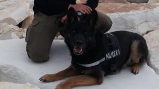 Η Ελληνική Αστυνομία αποχαιρετά την Τζάκι, τον τετράποδο «στρατιώτη» της Δίωξης Ναρκωτικών