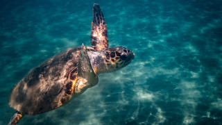 Ζάκυνθος: Χρονιά ρεκόρ το 20118 για τις φωλιές της θαλάσσιας χελώνας Caretta caretta