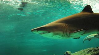Βίντεο που «παγώνει» το αίμα: Καρχαρίας άρπαξε το πόδι δύτη στην Ερυθρά Θάλασσα