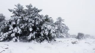 Καιρός: Χριστούγεννα στα λευκά με ψυχρή εισβολή - Xιόνια με τσουχτερό κρύο και στην Αττική