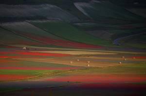Εντυπωσιακά χωράφια λουλουδιών κατά τη διάρκεια της ετήσιας άνθησης κοντά στην Περούτζια της Ιταλίας.