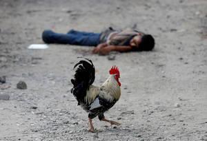 Κόκορας περνάει κοντά από το πτώμα ενός νεαρού που ήταν μέλος μιας συμμορίας στην Ονδούρα. (28 Σεπτεμβρίου 2018).