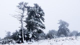 Καιρός: Χιονίζει στην Πάρνηθα - Δείτε LIVE εικόνα