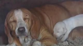 Ευχάριστα νέα για τη σκυλίτσα που επιχείρησαν να κάψουν μέσα σε φούρνο με τα κουτάβια της