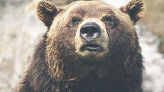 Σιβηρία: Αρκούδα ακρωτηρίασε το χέρι επισκέπτριας σε ιδιωτικό ζωολογικό κήπο