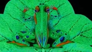 Βίντεο: Εκπληκτικές μεταμορφώσεις με τη δύναμη του... body painting