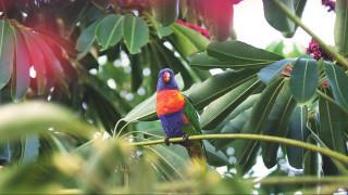 Μυστήριο με τους ασυνήθιστα πολλούς… παπαγάλους στην Αθήνα