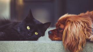 Τέρμα η πώληση γατιών και σκύλων στα βρετανικά pet shops