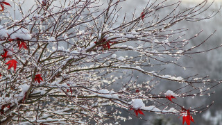 Καιρός: Πού αναμένονται χιόνια την Πρωτοχρονιά
