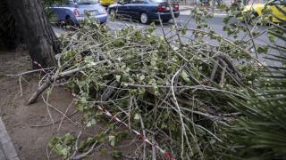 Κακοκαιρία «Ραφαήλ»: Πάνω από 100 κλήσεις στην Πυροσβεστική για κοπή δέντρων