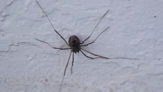 Πώς μια αράχνη έθεσε σε συναγερμό τις Αρχές στην Αυστραλία