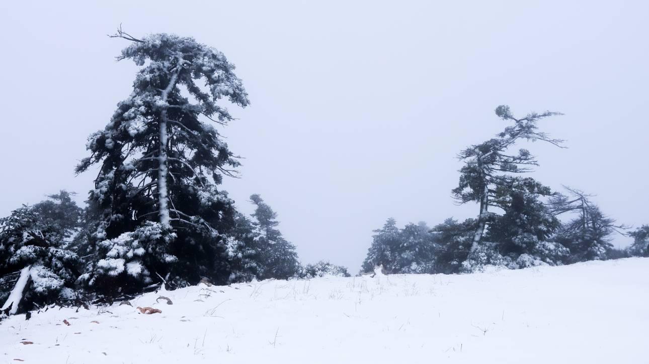 Καιρός: Στα «λευκά» ολόκληρη η Μακεδονία – Χιόνια και στη Θεσσαλονίκη