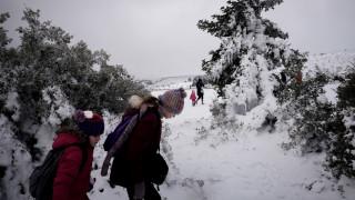 Παρνασσός: Λεωφορείο με 50 επιβάτες βγήκε εκτός πορείας